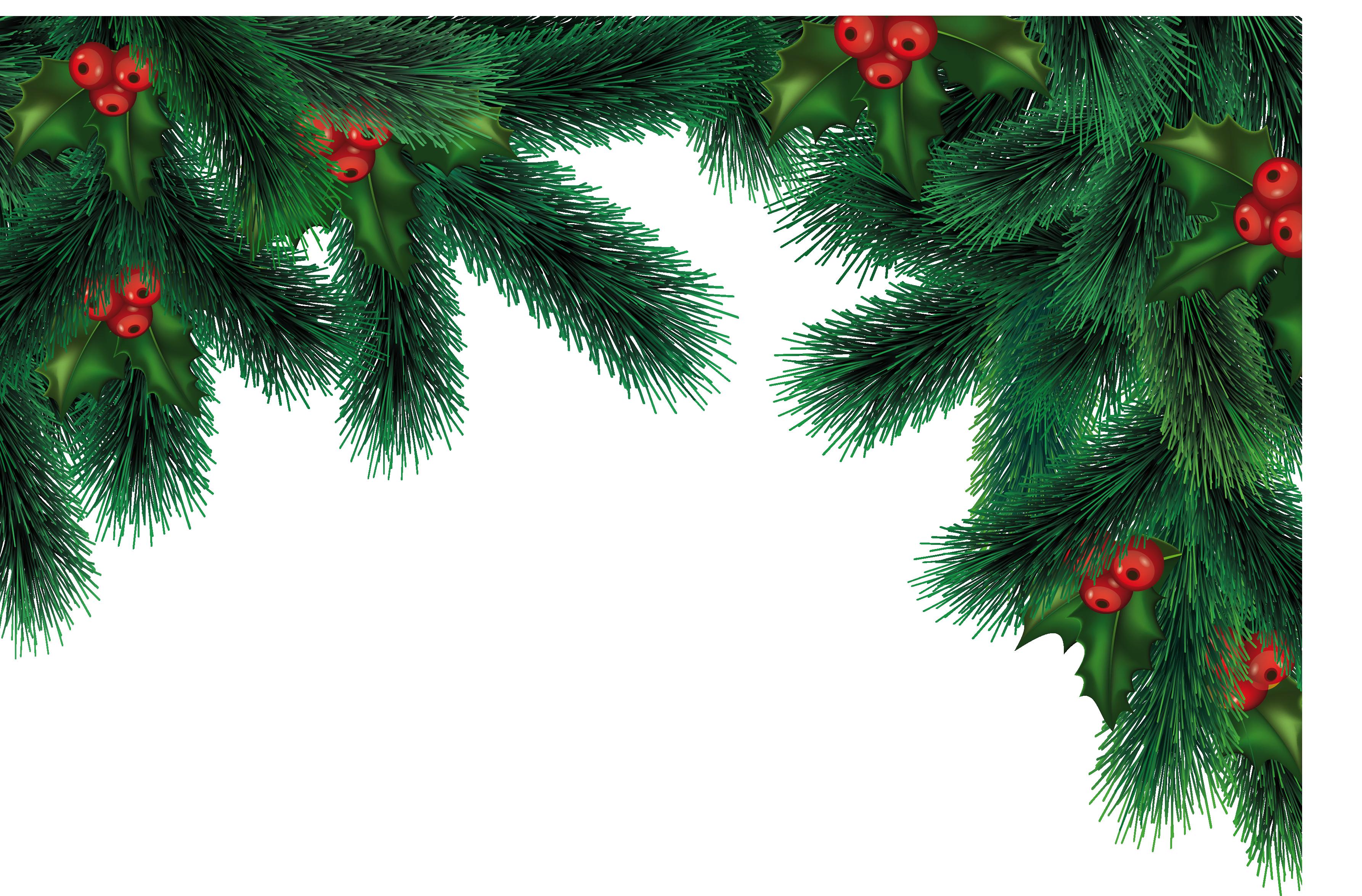 большие картинка веточка елки на прозрачном фоне устоявшимся традициям