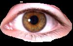 Скачать PNG картинку на прозрачном фоне Глаз увеличенный