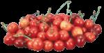 Скачать PNG картинку на прозрачном фоне Горка спелых ягод черешни с веточками