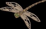 Скачать PNG картинку на прозрачном фоне Иллюстрация, коричнево-зеленая стрекоза