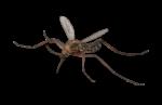 Скачать PNG картинку на прозрачном фоне Комар нарисованный, вид спереди, лапы в разные стороны
