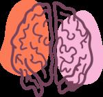 Скачать PNG картинку на прозрачном фоне Контур человеческого мозга, нарисованный, вид сверху