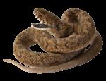 Скачать PNG картинку на прозрачном фоне Коричневая змея с отрытой пастью