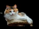 Скачать PNG картинку на прозрачном фоне Кот лежит, довольный