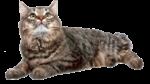 Скачать PNG картинку на прозрачном фоне Кот лежит и смотрит в верх