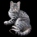 Скачать PNG картинку на прозрачном фоне Кот подозрительный