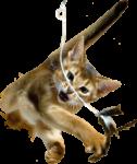 Скачать PNG картинку на прозрачном фоне Кот в прыжке за игрушкой