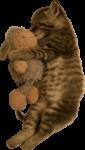 Скачать PNG картинку на прозрачном фоне Котенок спит с игрушкой