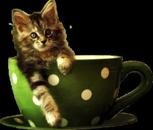 Котенок в зеленой кружке PNG на прозрачном фоне.