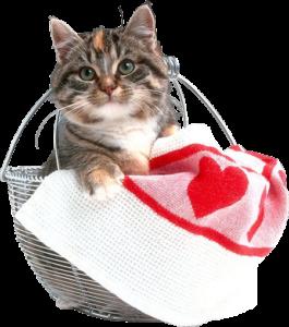 Котенок в железной корзинке PNG на прозрачном фоне.