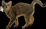 Скачать PNG картинку на прозрачном фоне Котик идет, виляя хвостом