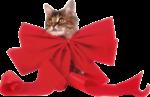 Скачать PNG картинку на прозрачном фоне Котик с большим красным бантом