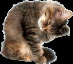 Скачать PNG картинку на прозрачном фоне Котик умывается
