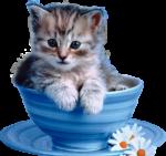 Скачать PNG картинку на прозрачном фоне Маленький котенок лежит в блюдце