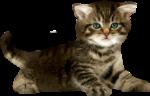 Скачать PNG картинку на прозрачном фоне Маленький котенок пытается встать