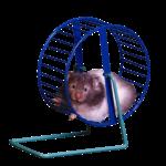 Скачать PNG картинку на прозрачном фоне Мышь в колесе