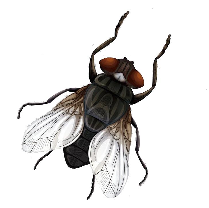 Картинка муха мультяшная для детей на белом фоне