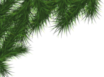 Скачать PNG картинку на прозрачном фоне Нарисованная ёлочная ветка в углу