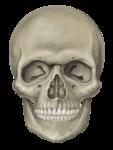 Скачать PNG картинку на прозрачном фоне Нарисованный череп, вид спереди
