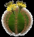 Скачать PNG картинку на прозрачном фоне Нарисованный кактус с желтыми цветами