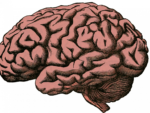 Скачать PNG картинку на прозрачном фоне Нарисованный карандашом человеческий мозг, вид сбоку