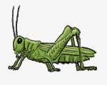 Скачать PNG картинку на прозрачном фоне Нарисованный зеленый кузнечик, вид сбоку