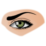 Скачать PNG картинку на прозрачном фоне Нарисованныйй женский глаз, бровь, ресницы