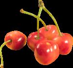 Скачать PNG картинку на прозрачном фоне Оранжевые ягоды черешни