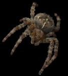 Скачать PNG картинку на прозрачном фоне паук крестоносец, вид спереди,