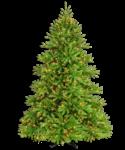 Скачать PNG картинку на прозрачном фоне пушистая зеленая елка