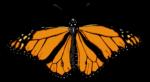 Скачать PNG картинку на прозрачном фоне Рисунок бабочки, оранжево-черная, вид сверху