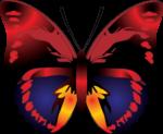 Скачать PNG картинку на прозрачном фоне Рисунок бабочки, оранжево-синей, вид сверху