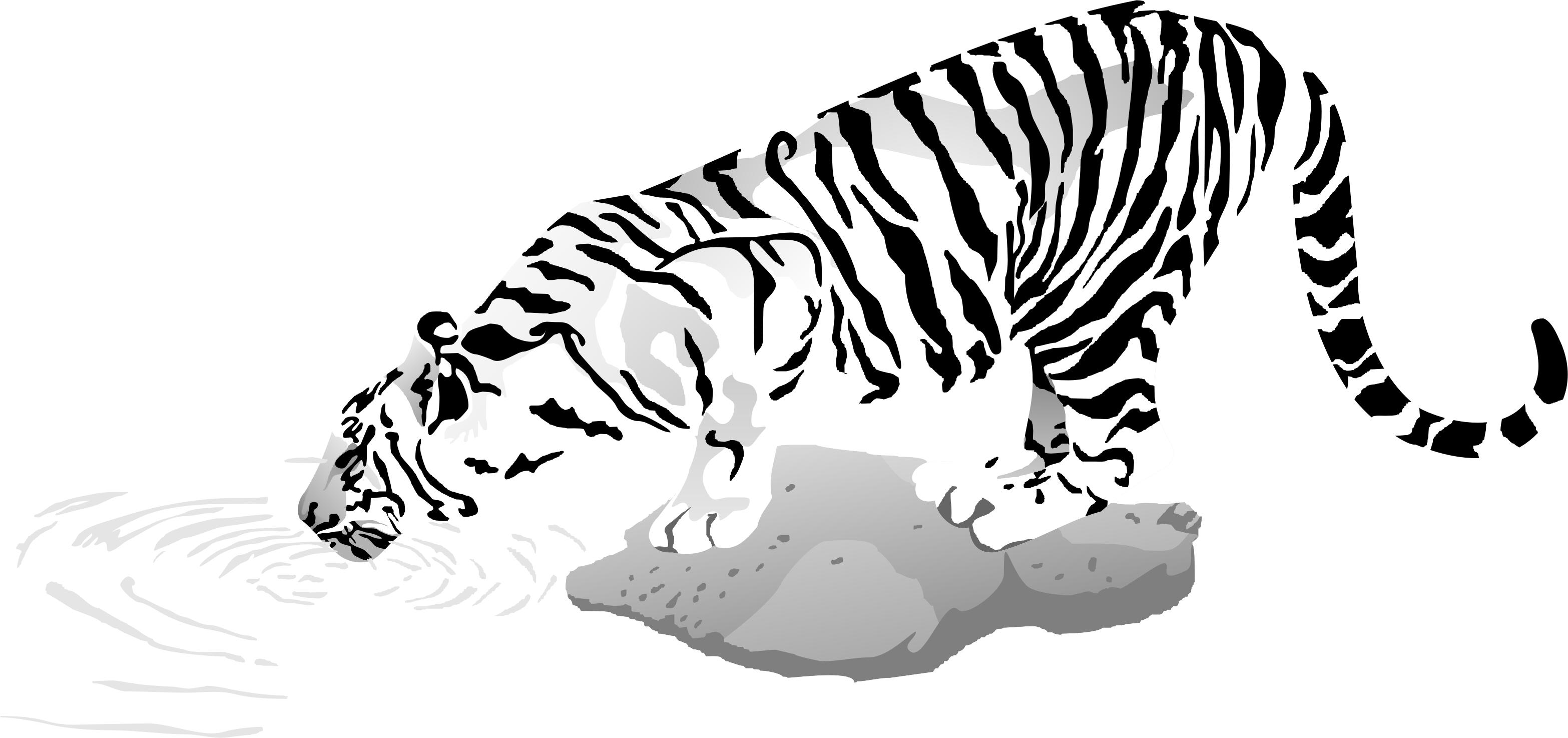 картинка белый тигр на прозрачном фоне идут римские цифры