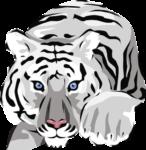 Скачать PNG картинку на прозрачном фоне рисунок белый полосатый, тигр, рисунок, нарисованный
