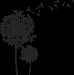 Скачать PNG картинку на прозрачном фоне Силуэт одуванчика с семенами(парашютиками)