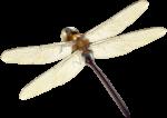 Скачать PNG картинку на прозрачном фоне Стрекоза глянцевая, нарисованная, вид сверху