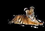 Скачать PNG картинку на прозрачном фоне тигр лежит, слева