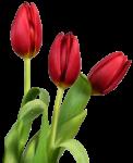 Скачать PNG картинку на прозрачном фоне Три красных июльпана