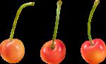 Скачать PNG картинку на прозрачном фоне Три оранжевые ягоды черешни отдельно