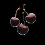 Скачать PNG картинку на прозрачном фоне Три отдельные ягоды черешни, черные