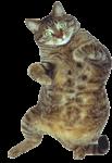 Скачать PNG картинку на прозрачном фоне Удивленный кот лежит на спине, вид сверху