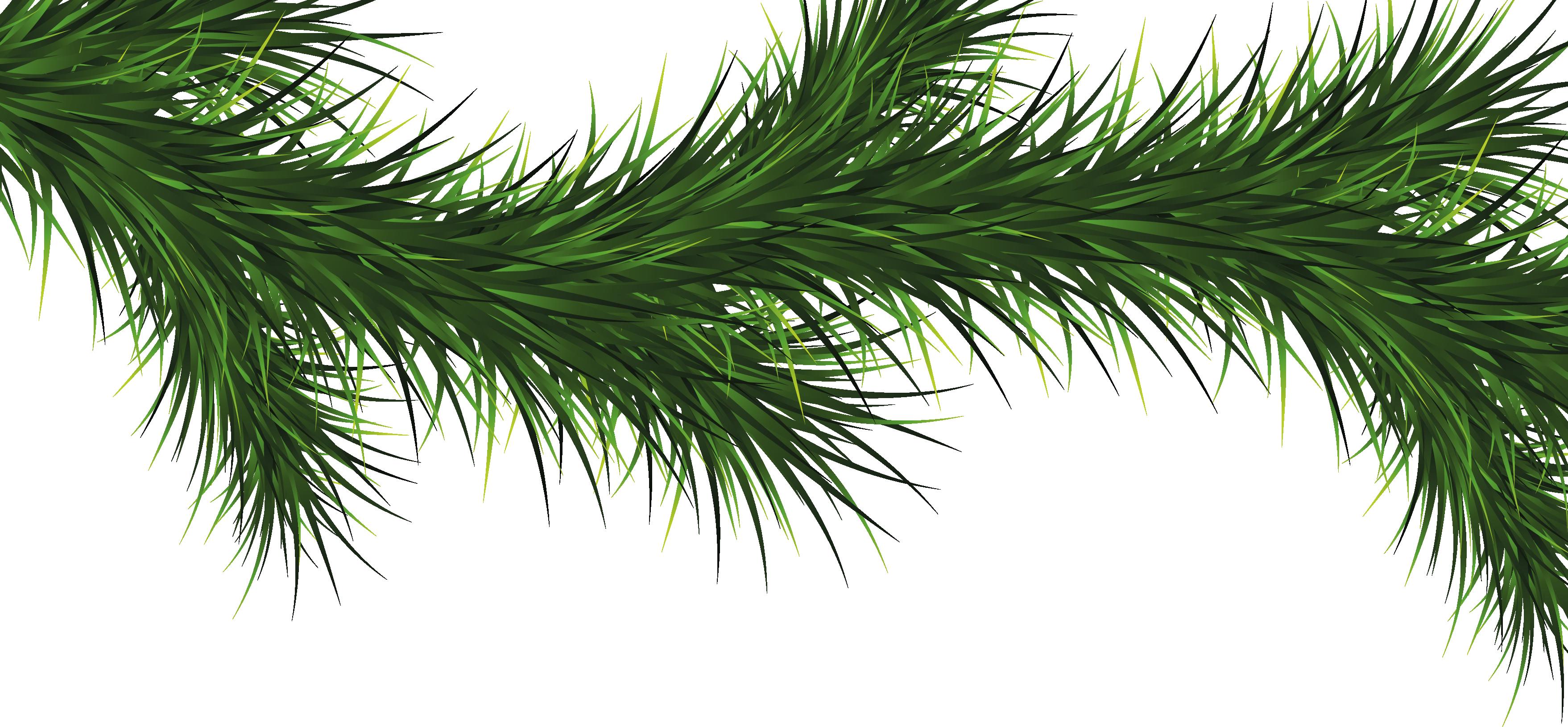 обычный картинка веточка елки на прозрачном фоне требует