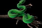 Скачать PNG картинку на прозрачном фоне Зеленая змея, на ветке